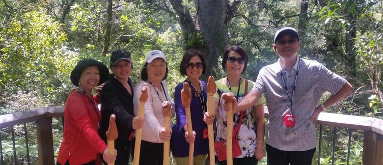 Opua Forest Traverse - Walk 11A