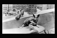 Discover Animal War Heroes