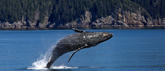 Our Changing Oceans - How Animals Bring Us Messages From Sea