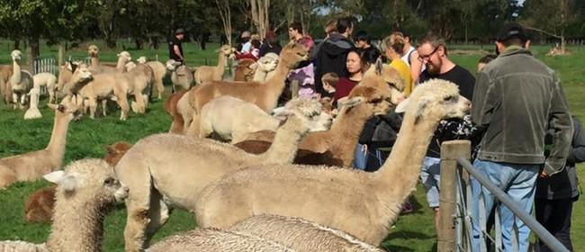 Alpaca Farm Event and Workshop