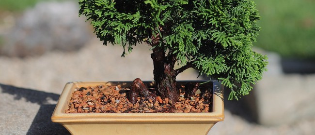 The Art of Bonsai (Workshop)