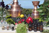 Gin Distilled Workshop