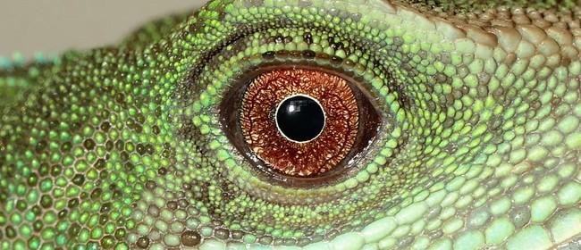 Dinosaurs: Secrets of the Skin