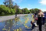 Waipawa Spring Festival Duck Day