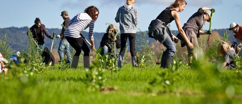 Conservation Week Planting