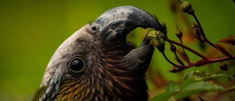 Otago Wildlife Photography Exhibition