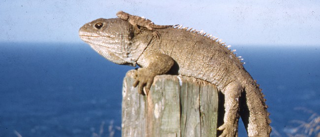 Tuatara Tuesday