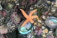 Marine Encounters - NZ Marine Studies Centre Guided Tour