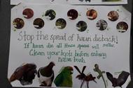 Teacher PLD: Caring for your Kauri