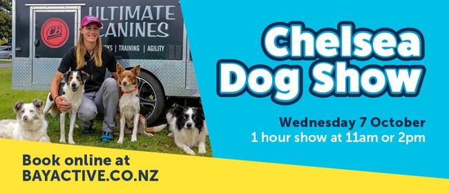 Chelsea Dog Show