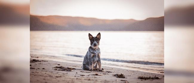 NZ's Top Dog Film Festival 2020