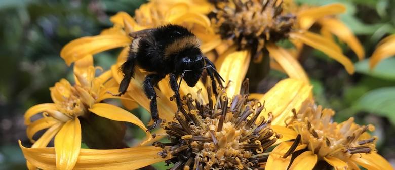 """Bumblebees – the """"super-pollinators"""""""