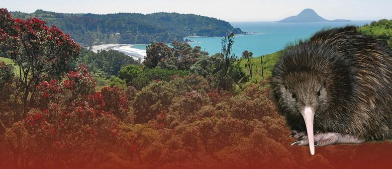 Kiwi Tracker Walk