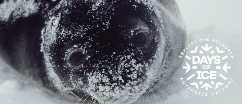 Days of Ice: Antarctica Through Fresh Eyes Film Competition