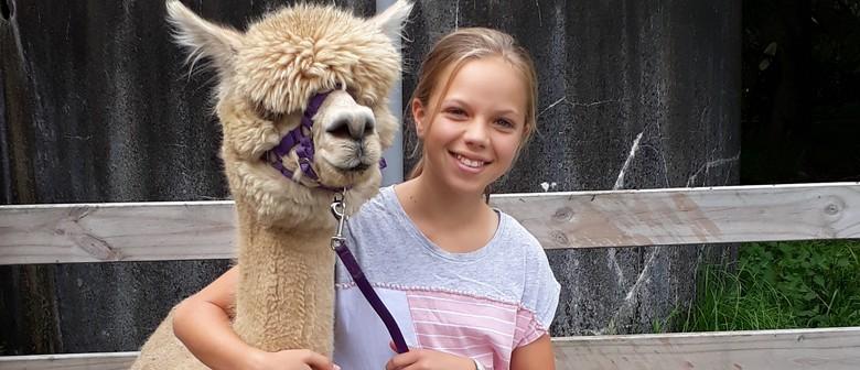 Walk-An-Alpaca Tours