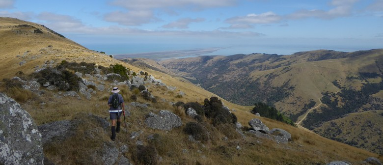 25 Te Ara Pātaka Branch Line from Little River Rail Trail: SOLD OUT