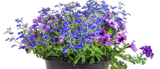 Transitioning Your Garden for Autumn and Spring