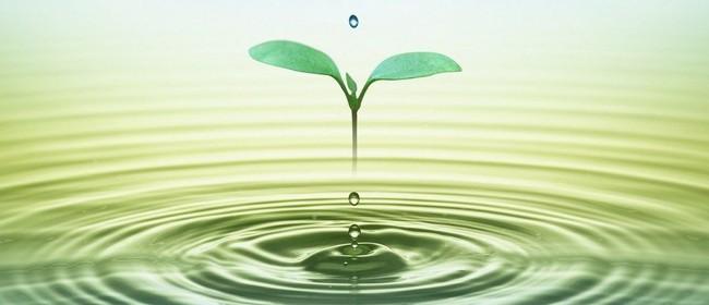 Learn to Meditate - Workshop
