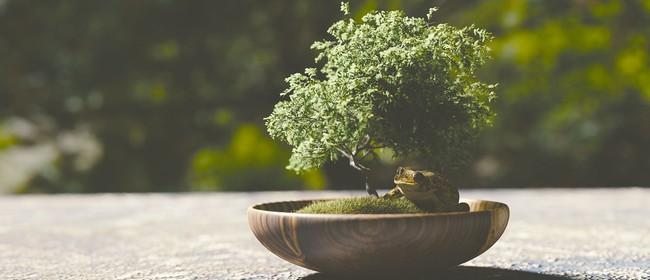 The Art of Bonsai Workshop