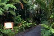 Guided Garden and Bush Walk