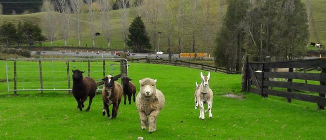 School Holiday Fun at Sheepworld