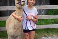 Walk-An-Alpaca Tours