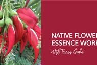 Native Flower Essence Workshop with Teresa Goodin