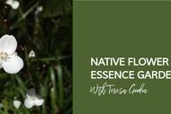 Native Flower Essence Garden Tour with Teresa Goodin