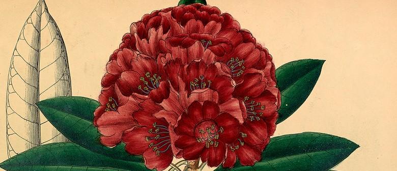 Botanical Art & Illustration Course