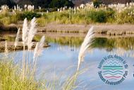 Riwaka Have Your Say: Environment Plan
