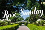 Rose Sunday 2020