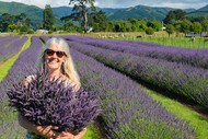 Pick your own lavender - January 2021