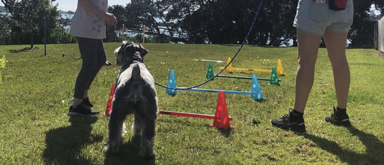 Intro to Dog Agility - After School Programme