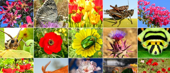 Biodiversity in Hawke's Bay – What's Our Future?
