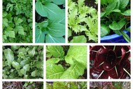 Sustainable Backyards - Sow Your Summer Salad and Herbs