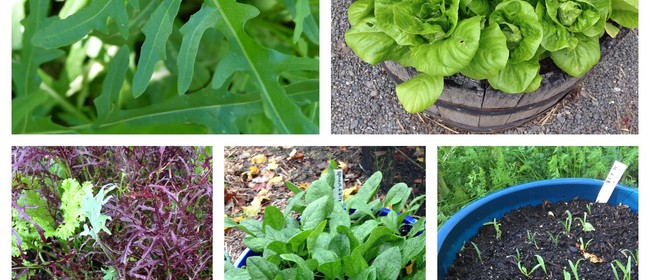 Sustainable Backyards - Salad and Herbs in Small Spaces