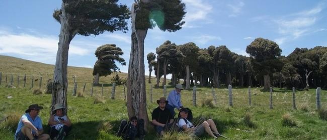 13 Tōtara Transforming Landscapes encircling Rod Donald Hut