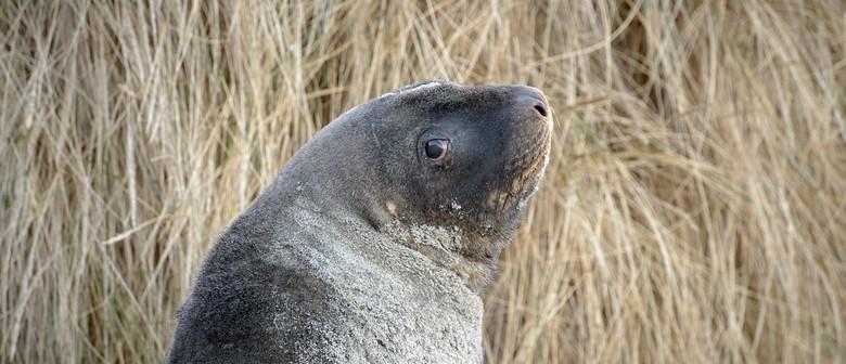 NZ Wildlife Photography Tour - 9 Days