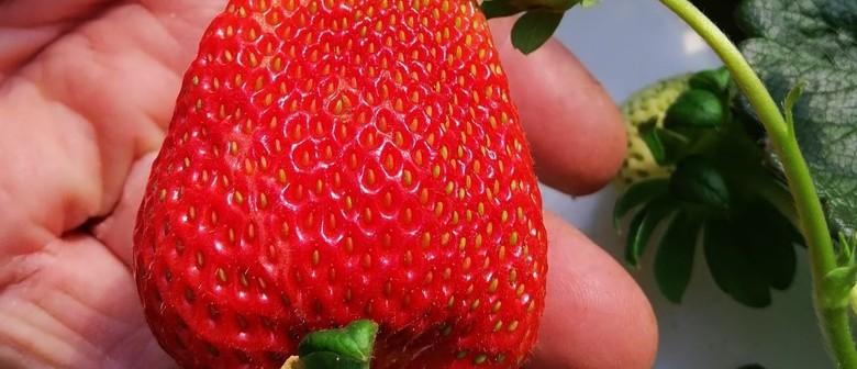 Soil Less Gardening - Hydroponics Demystified !!