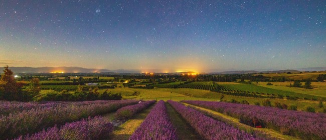 Martinborough Lavender Star Gazing