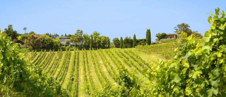 Winegrowing on Waiheke