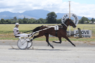 Marlborough Harness Racing - Friday Twilight Meeting