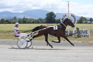 Marlborough Harness Racing