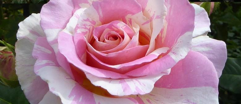 Free Rose Display - Canterbury Rose Society 75th Anniversary