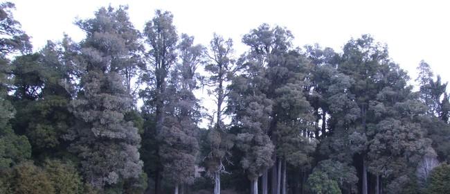 Rowan's Forest Tour