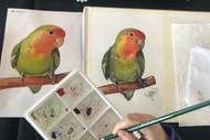 Fun Art Classes for Beginners in Takapuna