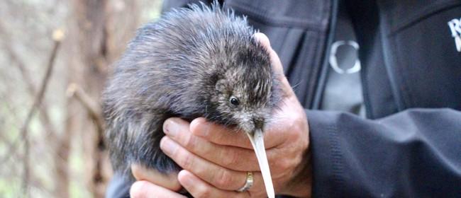 Kiwi Release On Rotoroa Island