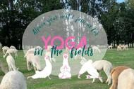 Yoga with Alpacas