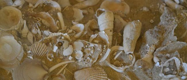 Fossil Hunting Field Trip