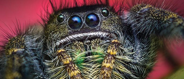 Bugs! Keeper Curiosity